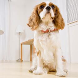 Mit Angst beim Hund umgehen