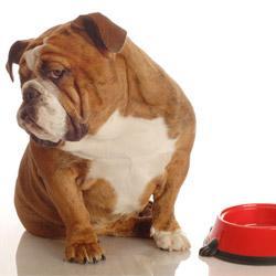 Futterumstellung Hund