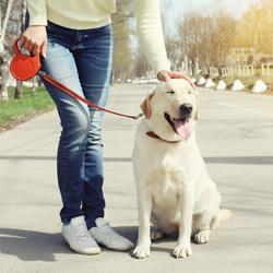 hunde-leine-begruessung
