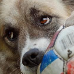 Fehler beim Hundespielzeug