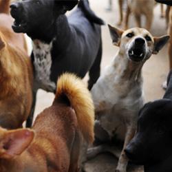 Warum bellen Hunde