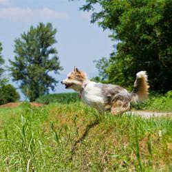 Der Jagdtrieb beim Hund