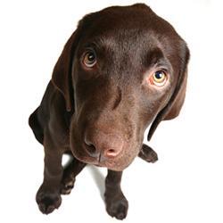 Warum jagen Hunde ihren Schwanz