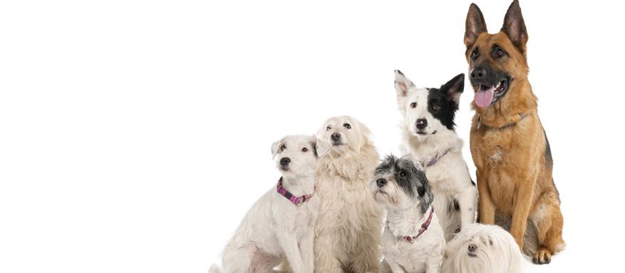 Warum jagen Hunde ihre Rute